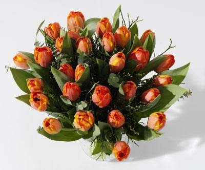 Tulipaner i bundter m. 10 stk. kun 49,95<br>