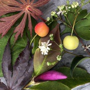 Eksklusive planter