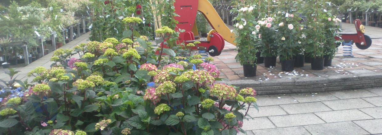 Stort udvalg af haveplanter også om sommeren.